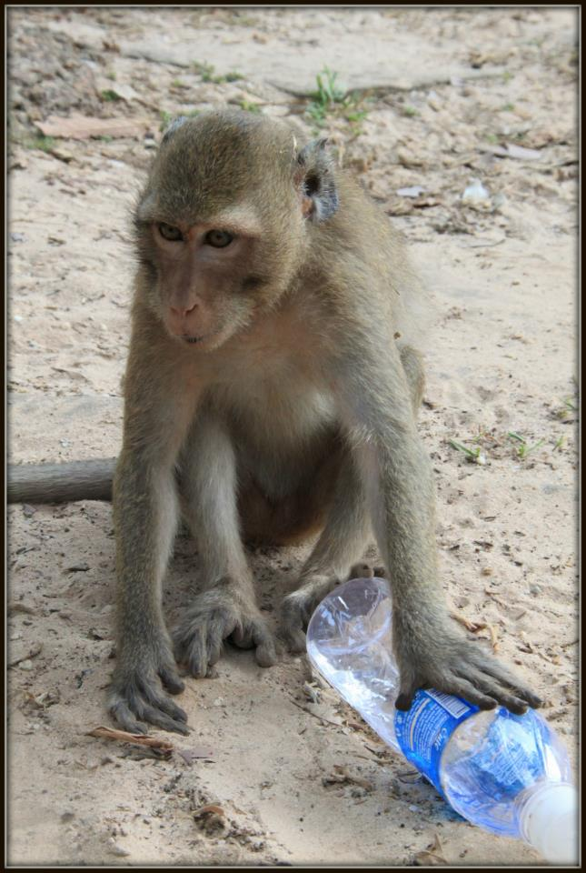 Monkey at Angkor Wat trying to steal my water by Clelia Mattana