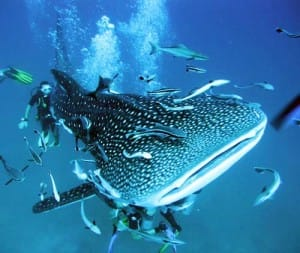 Koh-tao-travel-guide-scuba-diving-certification-keep-calm-and-travel-blog-