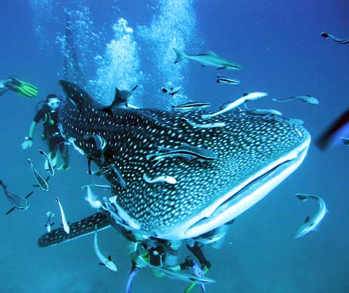 Koh tao travel guide where to go what to see keep calm and travel - Dive in koh tao ...