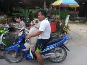 koh-tao-motorbike-rental-keep-calm-and-travel-travel-guide