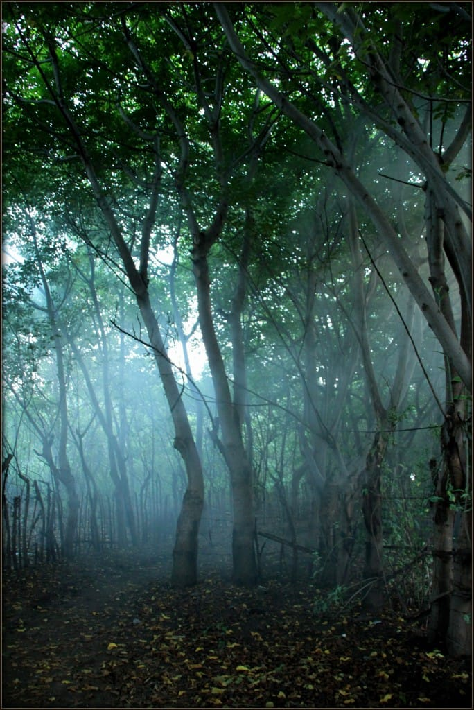 Enchanted forest - Gili Islands