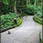 Monkey Forest path