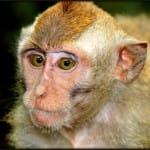Monkey at Monkey Forest-Ubud Bali Indonesia