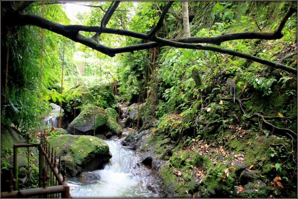 Monkey forest- Ubud- Bali