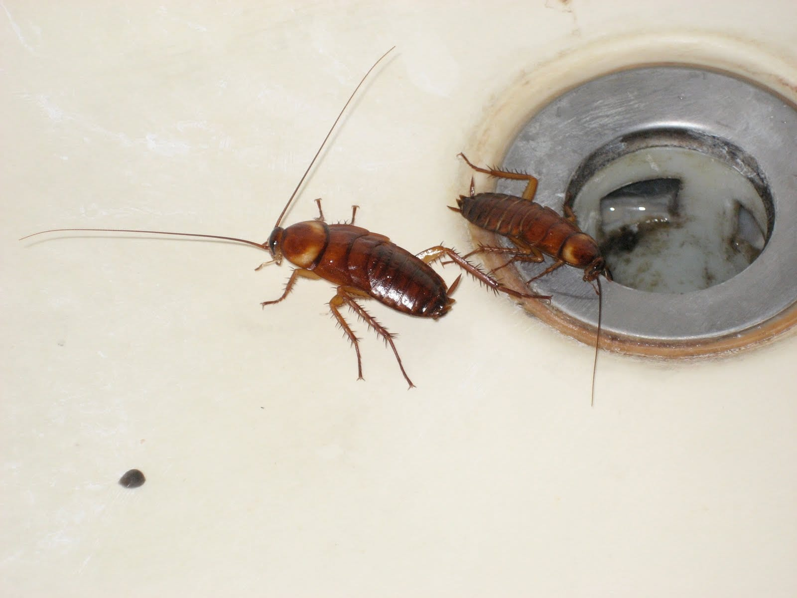 Small cockroaches in bathroom