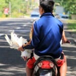 CHICKEN-AND-SCOOTER