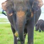 BIG ELEPHANT POST OK