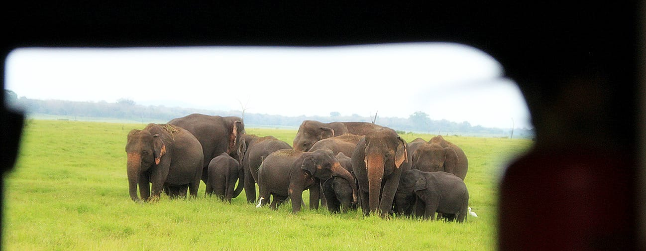 elephants kaudulla park sri lanka safari