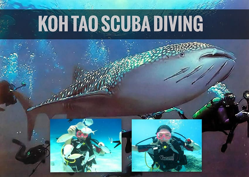 koh tao scuba diving