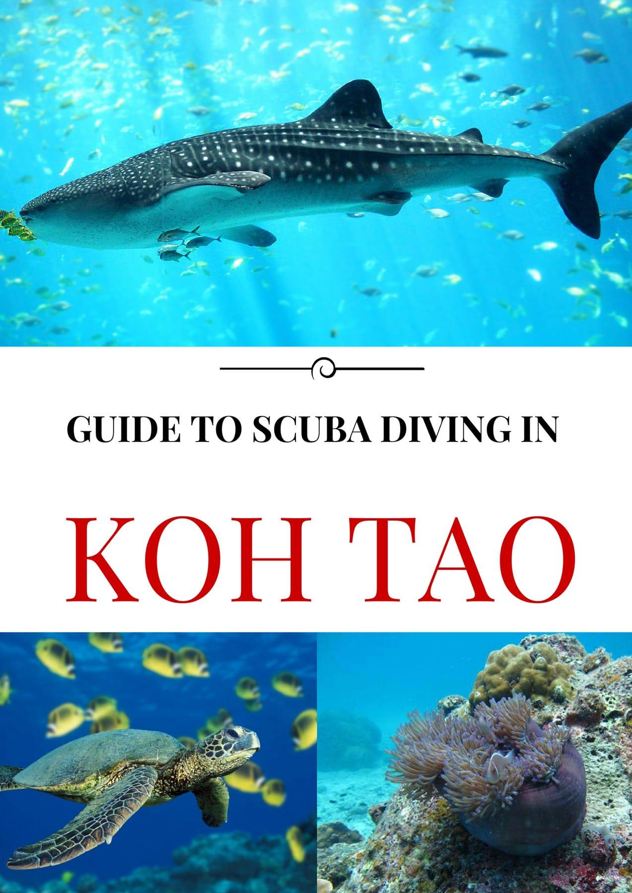 koh_tao_scuba_diving_guide