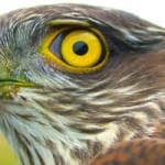 east-sussex-falconery-south-uk-holidays