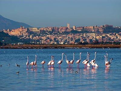 cagliari-pink-flamingos-molentargius-sardinia-holidays