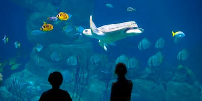 portsmouth-boue-reef-aquarium-holidays-on-the-south-coast-of-the-uk-england-things-to-do
