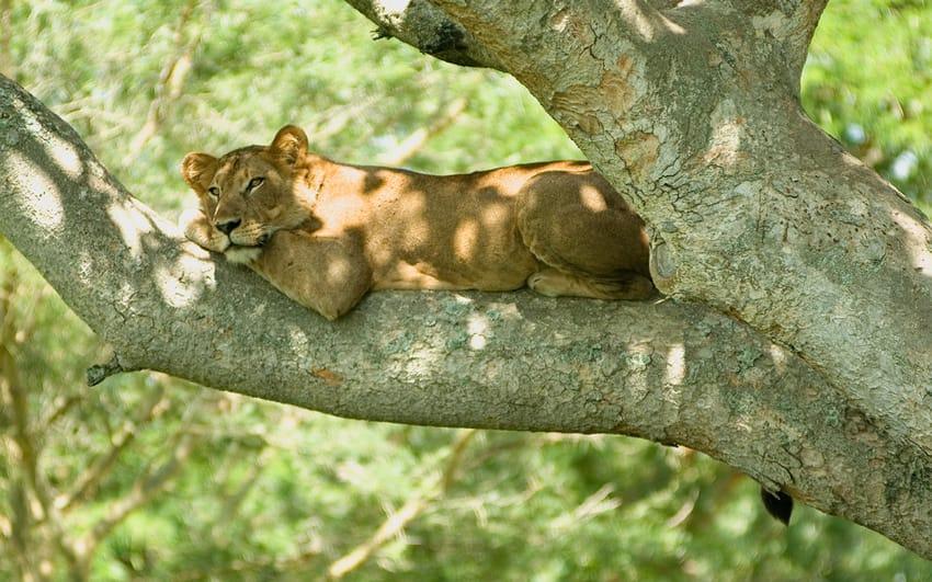 Tree_lion_2