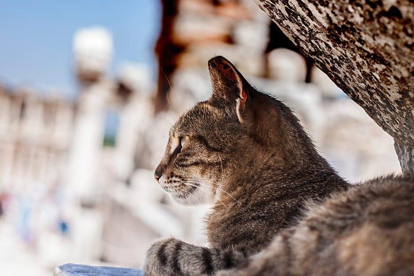 CAT_EPHESUS_TURKEY_THINGS_TO_DO_IN_ONE_WEEK