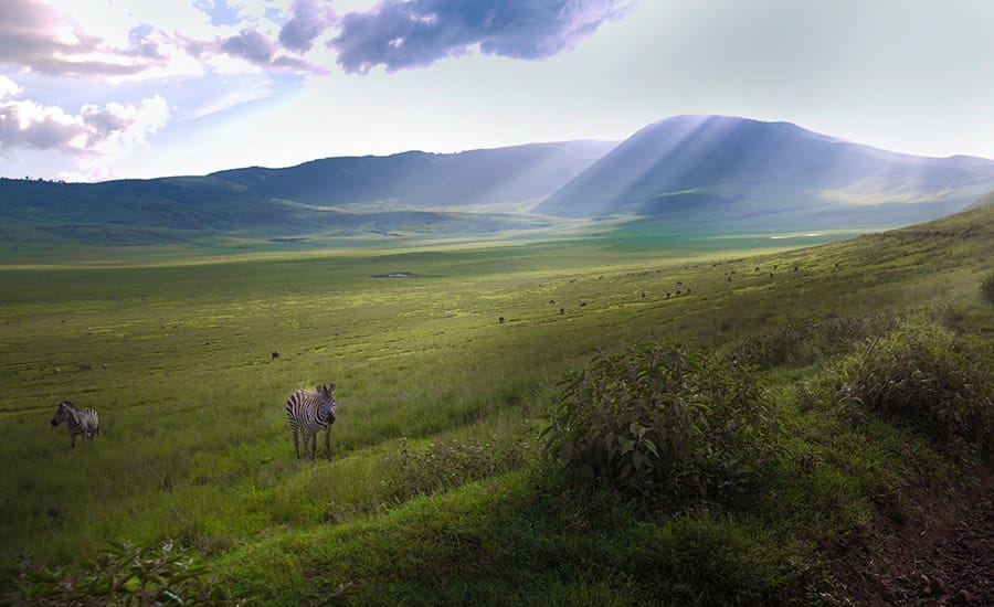 Africa-Tanzania-travel-tips-Ngorongoro-zebras-ray-of-light-africa
