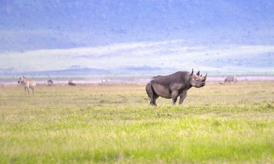 rhino-tanzania_africa_serengeti_big_five