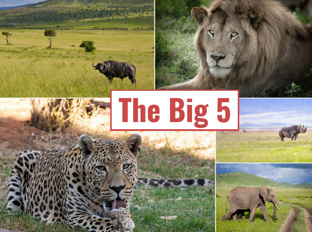 Africa-tanzania-travel-tips-the-big-five