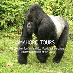 amahoto-tours