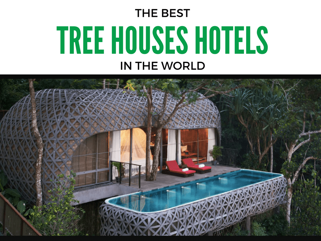 Top 6 amazing tree house hotels that will make you fall for Best house in the world