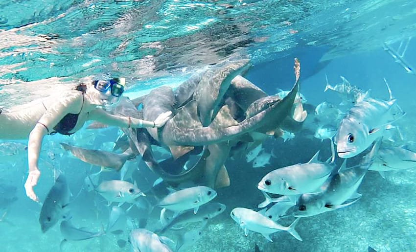 Belize_best_snorkeling_tours_swimming_with_sharks