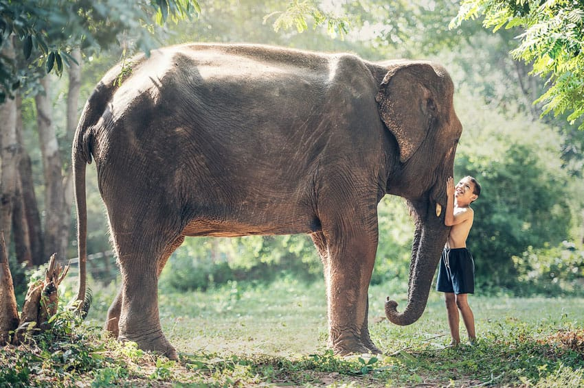 Thailand_responsible_tourism_holidays_in_Thailand_elephant_riding