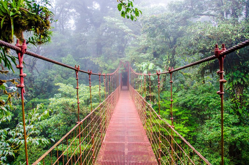 Costa_rica_family_holidays_ideas-Bridge-in-Rainforest-Costa-Rica-Monteverde