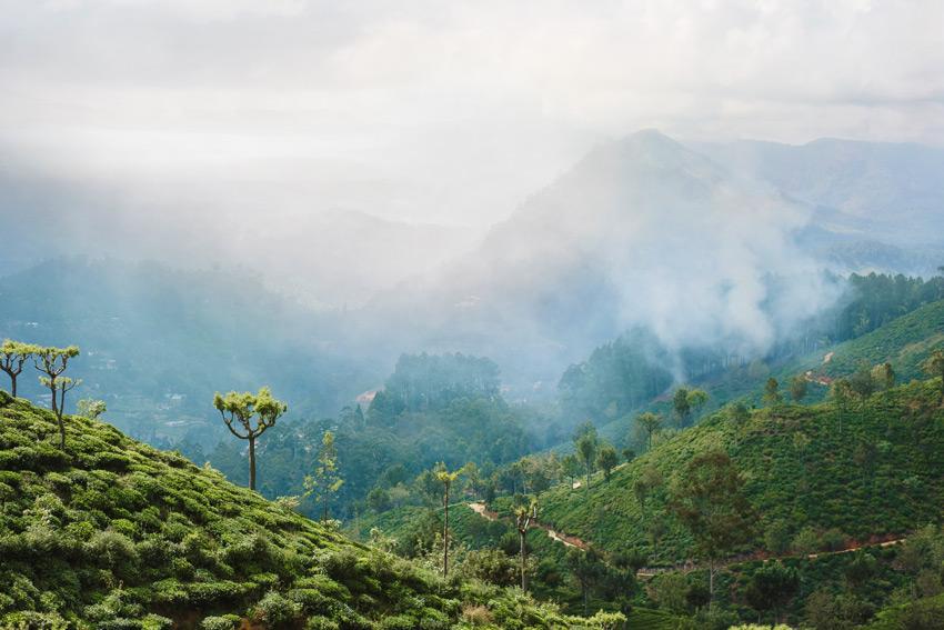 SRI-LANKA-Sunset-over-tea-plantations-in-Haputale,-Sri-Lanka.-Tea-plantation-in-sunset-time.-Nature-background