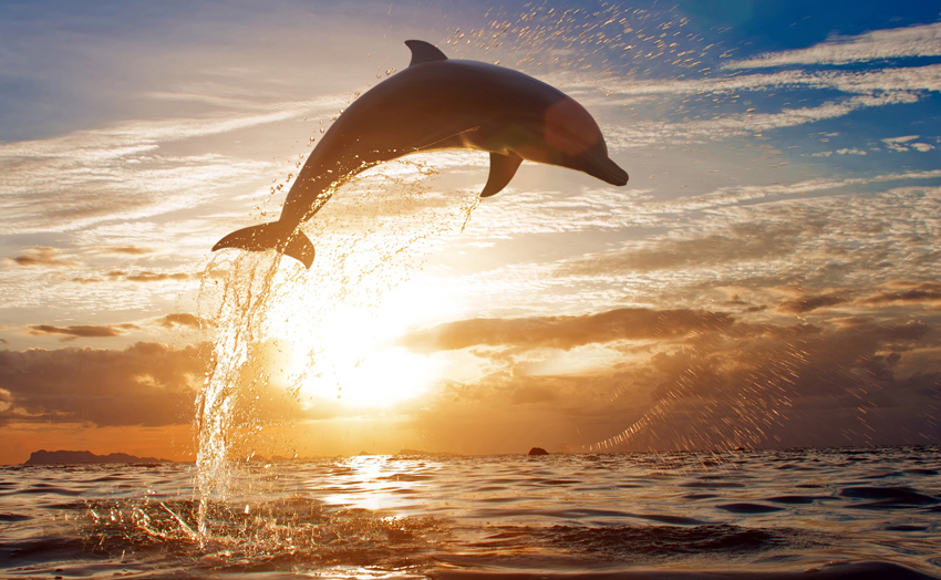 TENERIFE-THINGS-TO-DO-BEYOND-THE-BEACH-SEE-THE-DOLPHINS-JUMOING-IN-THE-SEA