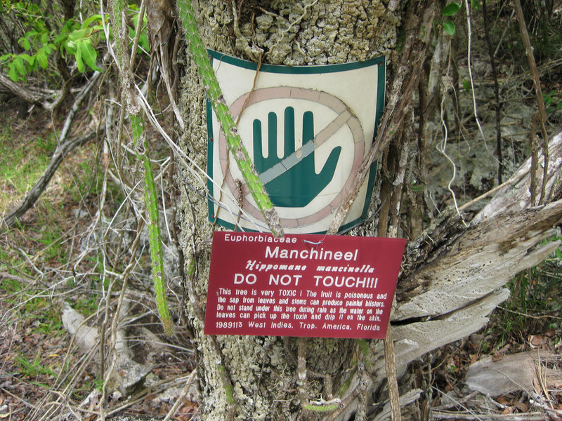 Manchineel tree-warning-sign-dangerous-fruits-and-plants