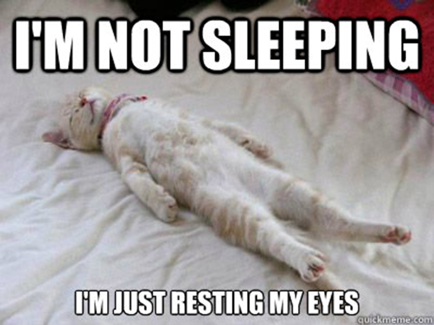 I-Am-Not-Sleeping-I-Am-Just-Resting-My-Eyes-asleep-cat-funny-travel-stories
