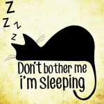 asleep-cat-funny-travel-stories