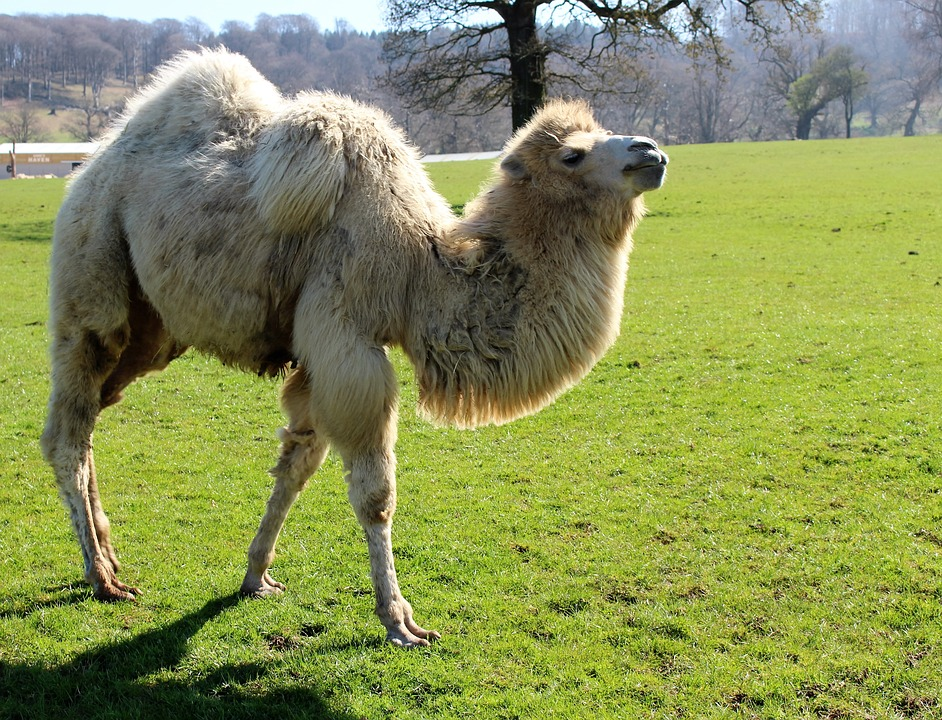 smelly-camel-funny-horror-travel-stories