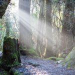 weindorfers-forest-walk-TASMANIA