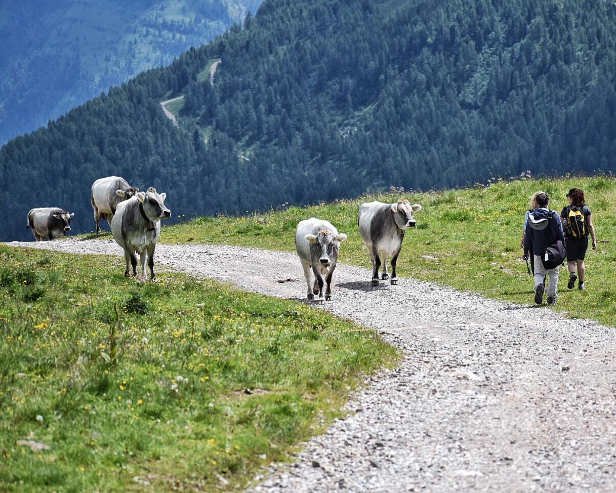 Alta-Via-dei-Monzoni-crossing-pastures-while-hiking-dolomites