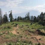 Dolomites-hiking-trails-Araioflight