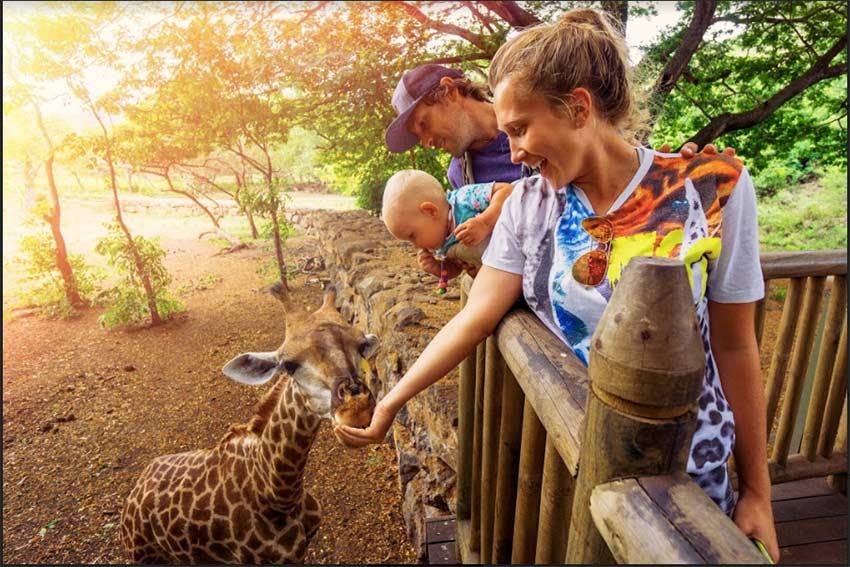 family-friendly-safari-for-kids