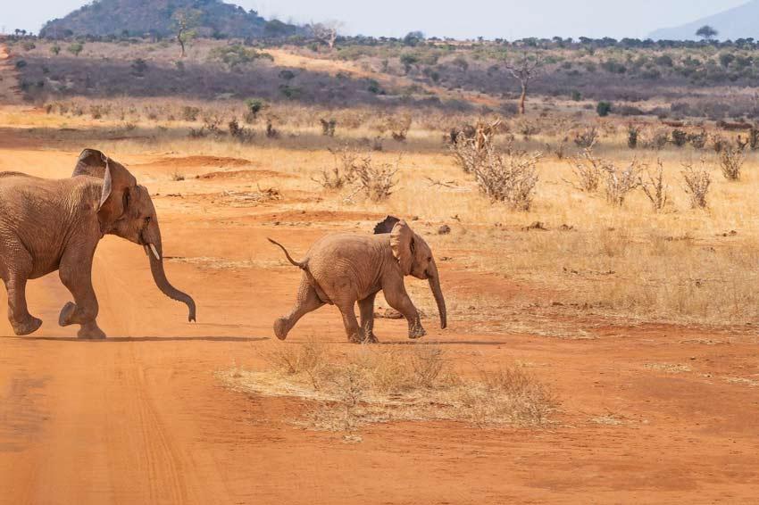 family-friendly-safaris-for-kids