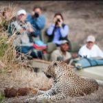 family-friendly-safari-with-kids