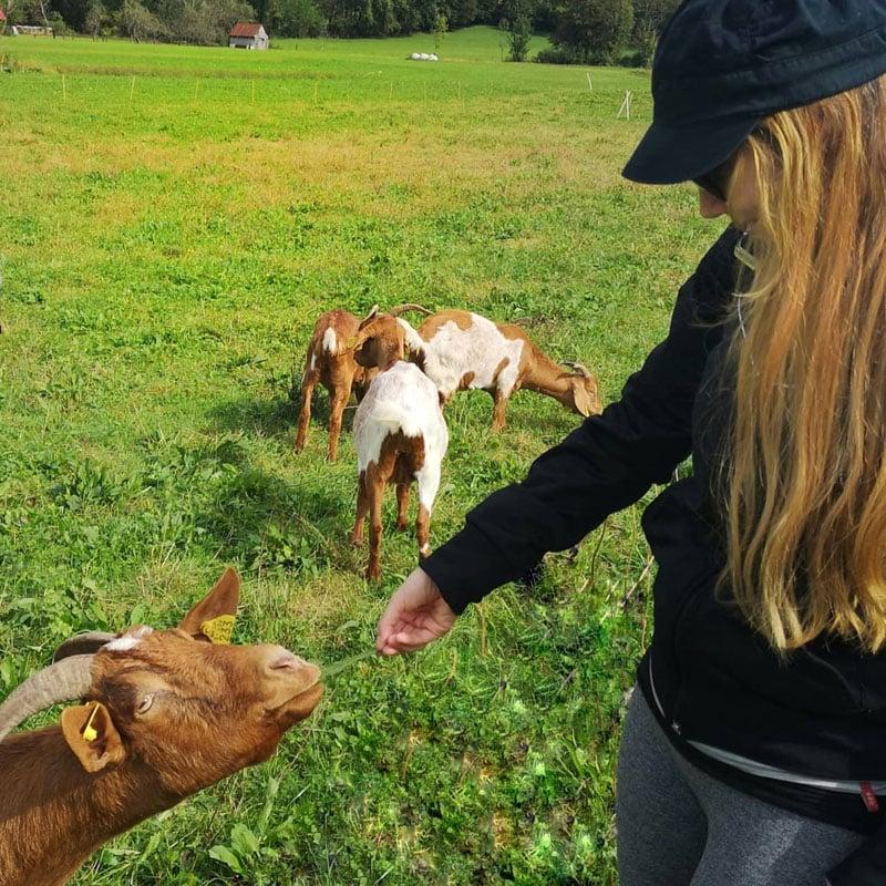 feeding-the-goats-in-slovenia-tolmin