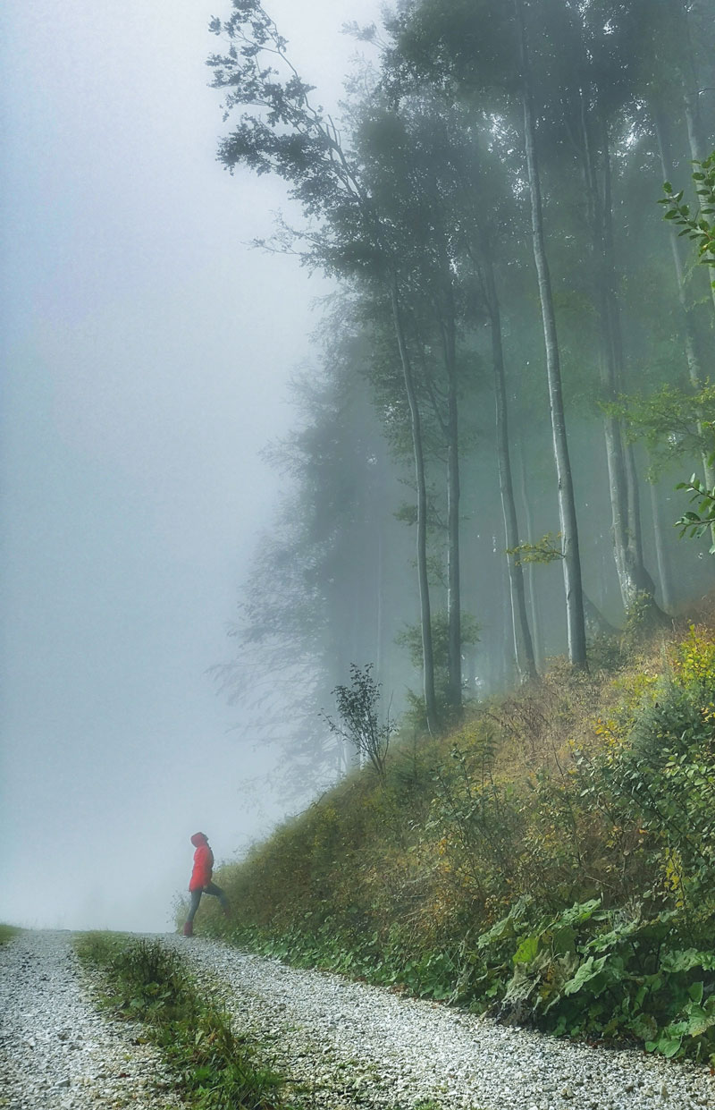 slovenia-by-camper-one-week-itinerary-misty-forest-on-the-way