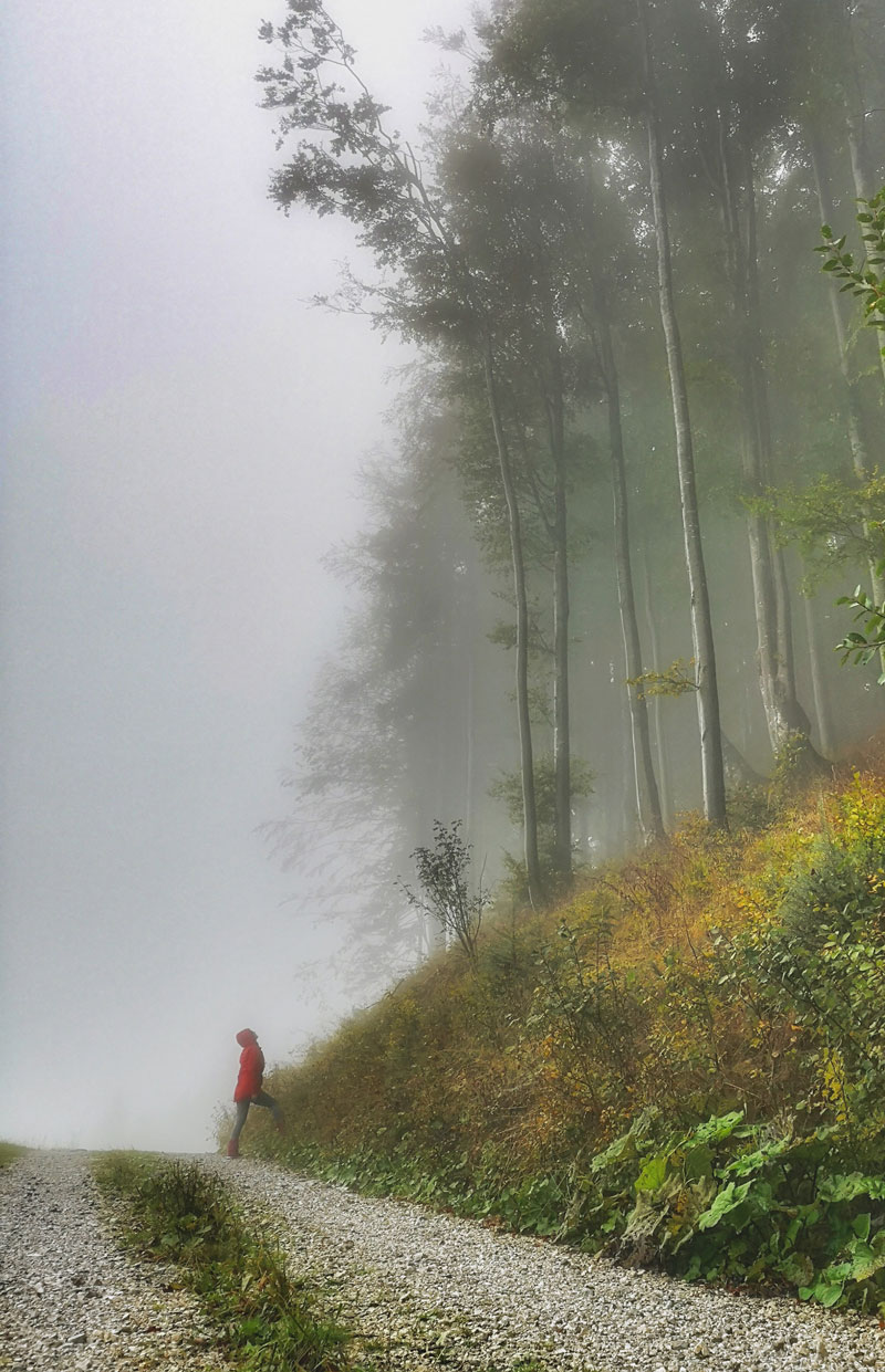 slovenia-one-week-itinerary-misty-forest